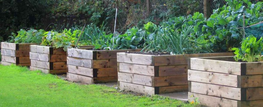 Guide To Raised Bed Vegetable Gardening