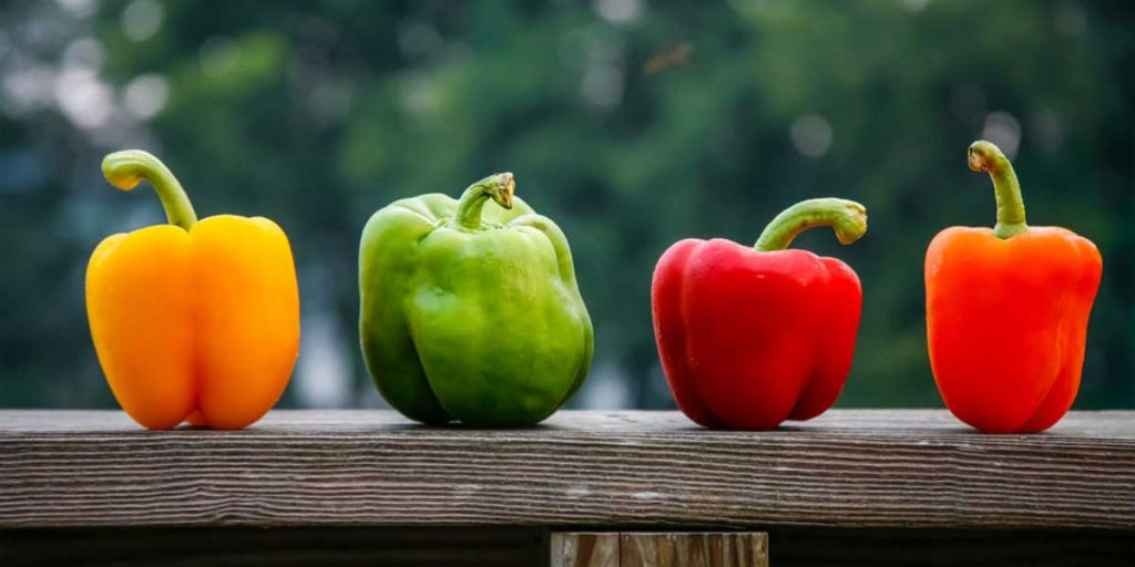 How To Harvest Bell Peppers?